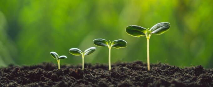 blogTitle-google_grow_my_store_plants_growing_seedlings-w680h280